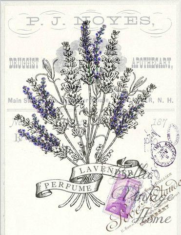Botanical Print Lavender Perfume