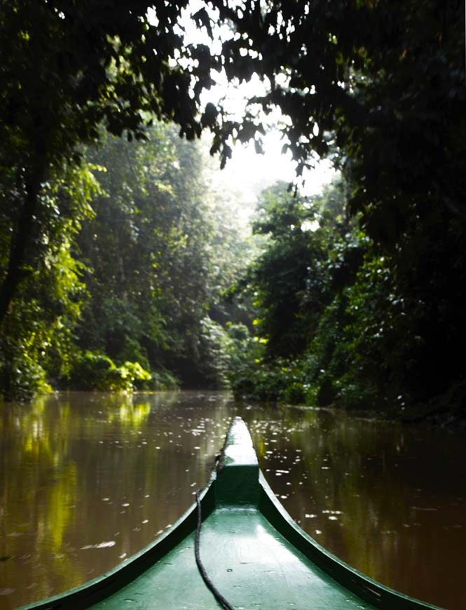 Travelling along the Kinabatangan river is a jungle experience like nothing else!