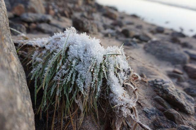 Luukku 15. onni blogit, joulukalenteri, luonto, kauneus, joulu, joulunodotus,