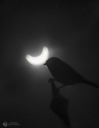 Auringonpimennys_solar+eclipse_Luontokuva_luontokuvaaja+Lasse+Niskala