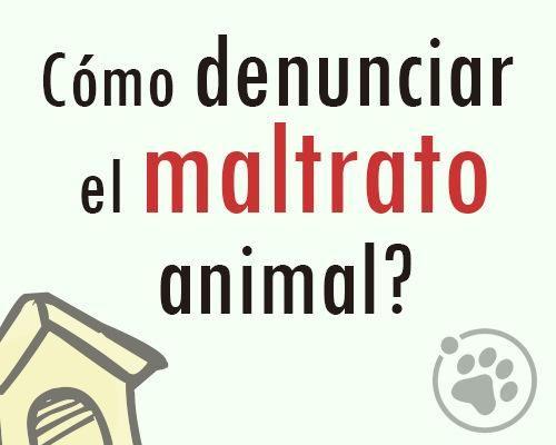 ¿Cómo denunciar el maltrato animal?   https://www.facebook.com/photo.php?fbid=1518787371683836&l=e2408ab798