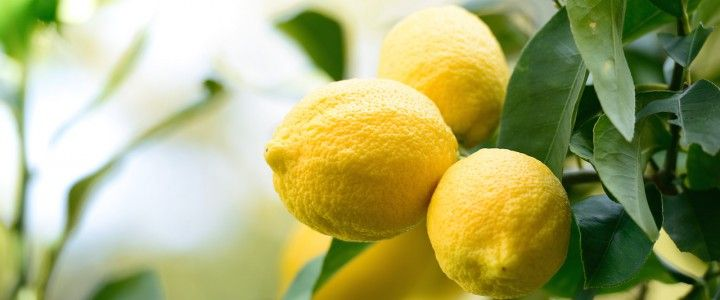 5 GREAT USES FOR LEMONS