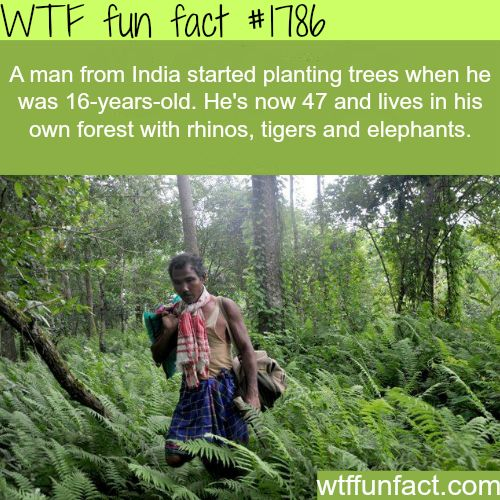 A man in India plants a whole forest -WTF fun facts