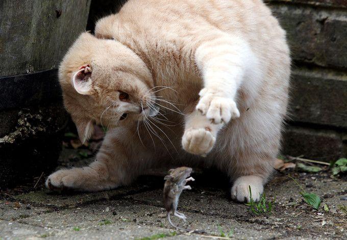 Прикольные картинки с надписями кот и мыши, бумаги
