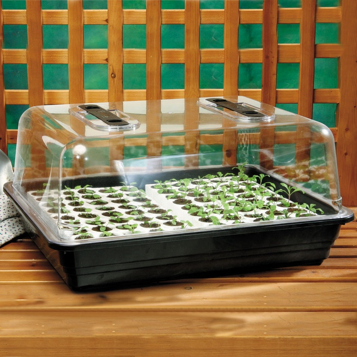 17 Best Images About Bio Dome Seed Starting On Pinterest