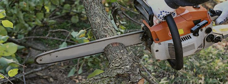 Tree Trimming with Strunk Tree Removal  Strunk Tree Removal offers fast and reliable tree trimming services at your convenience, trimming as much or little as you prefer. Our experienced tree trimmers will have your trees looking clean and neat in no time. We understand what it takes to get the job done and operate with only the highest levels of professionalism, efficiency, and quality. If you are interested in our tree trimming services, contact us at Strunk Tree Removal for professional…