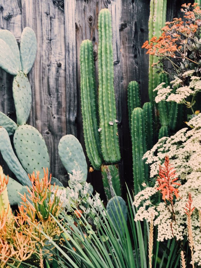 2427 Best Planties Images On Pinterest Gardening
