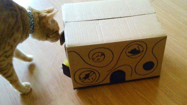 O grande desafio ao conviver com gatos é que eles se entediam muito fácil. Espertos, curiosos e exploradores por natureza, parece que nenhum brinquedo consegue prender a atenção deles por muito tem…