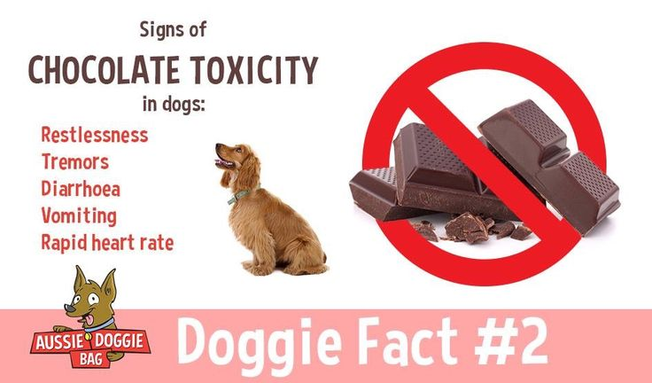 Chocolate toxicity in dogs #dogs #dogfacts #doghelp