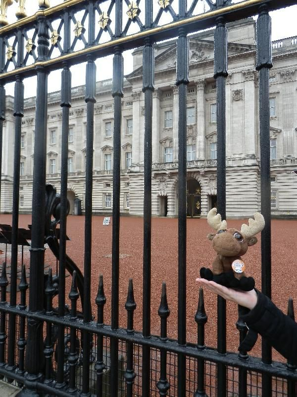 Mr. Moose at the Buckingham Palace gates. Unfortunately, no guard changing ceremony was held.