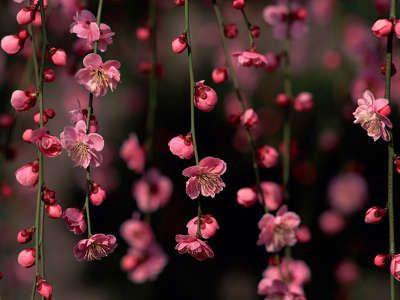 37 best flower wallpaper hd images on pinterest beautiful flowers pink flowers curtain for your ipad ready to go awesome nature detail to make a nice change voltagebd Choice Image