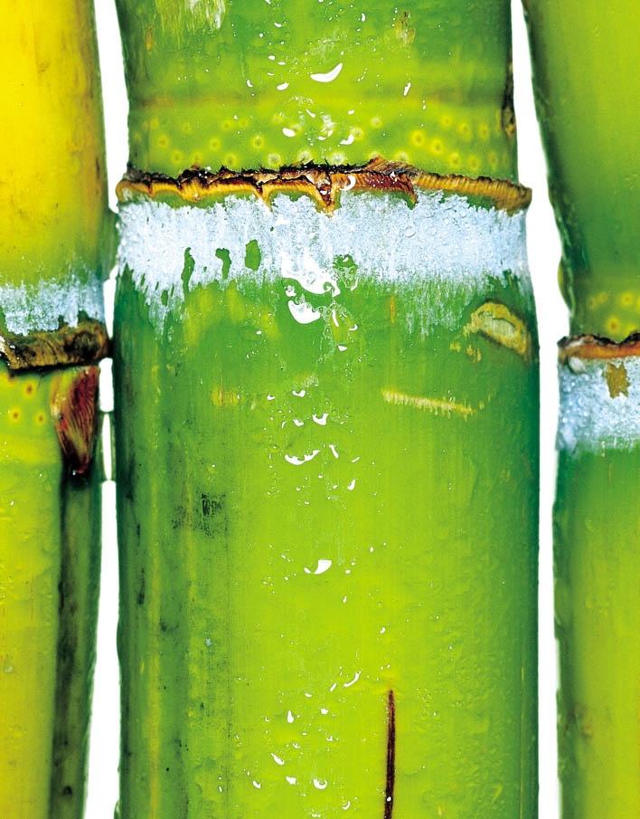 Sugar cane...makes me miss Rwanda.