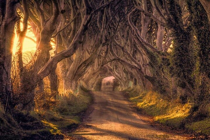 Forest Path Northern Ireland Dark Hedges Magical