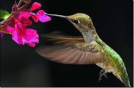 Картинки по запросу редкие птицы с названием
