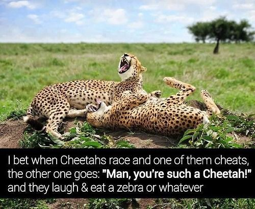 Cheetah lulz.