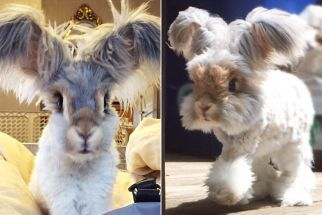 World's cutest rabbit is new Instagram sensation –  #cutest #instagram #rabbit #sensation #wo…