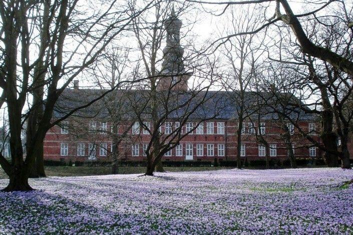 Krokusblüte in Husum