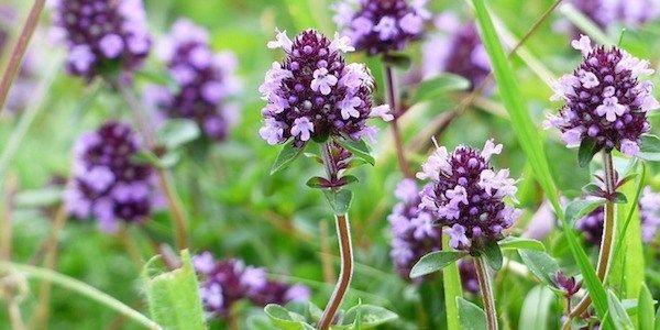 Quels sont les plantes médicinales que l'on peut utiliser pour se soigner ?