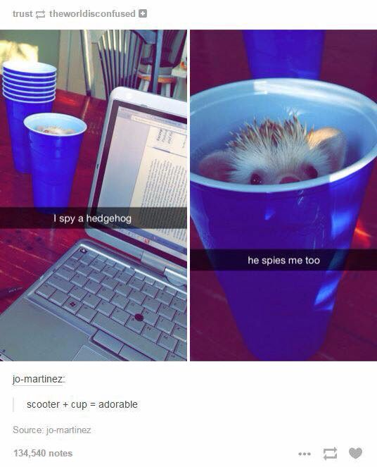 I spy a hedgehog in a cup