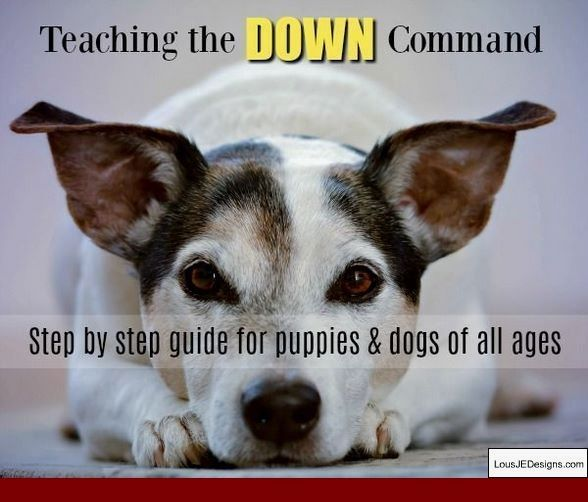The Best Way To Train A Deaf Dog And Pics Of Ways To Train A Dog