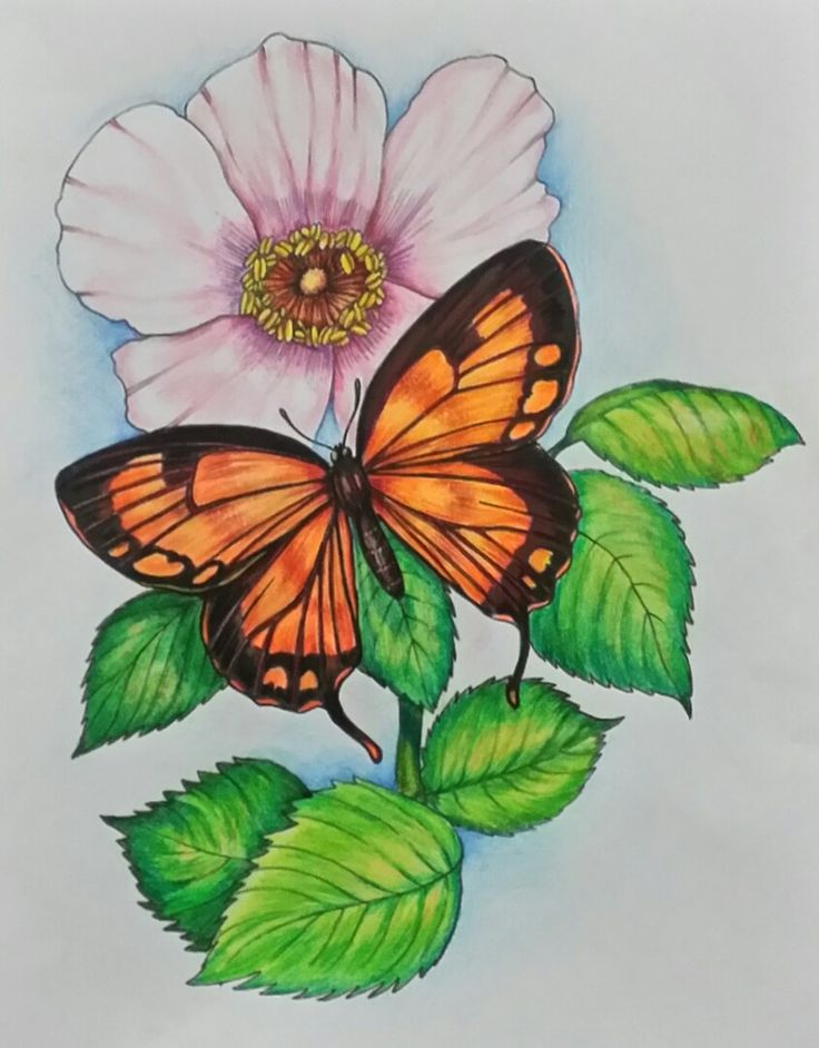 3rd Place 18+: Peggy Swearingen from Butterflies Coloring ...