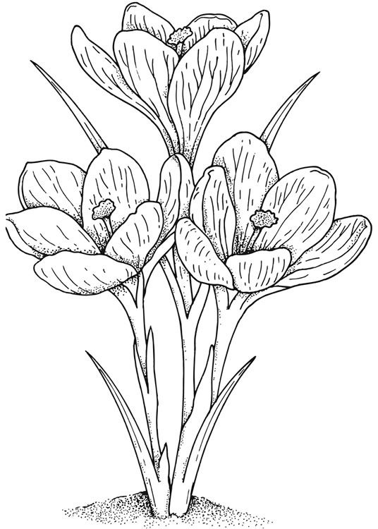 Flower Line Drawing Book : Best images about drawing on pinterest coloring