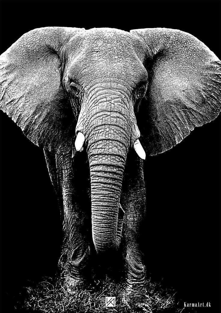 Billede af Elefant plakat