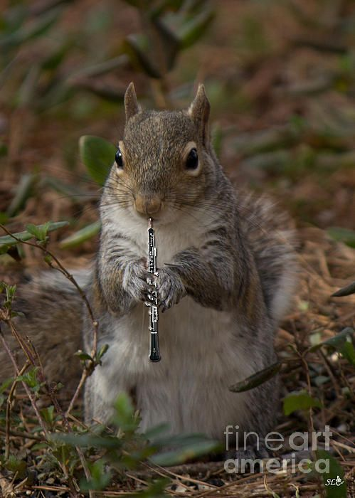 The Acorn's Oboe player By Sandra Clark  a little squirrel from the band of squirrels called the Acorns is playing the oboe.