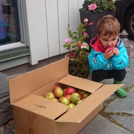 Äpplen och en finsmakare.