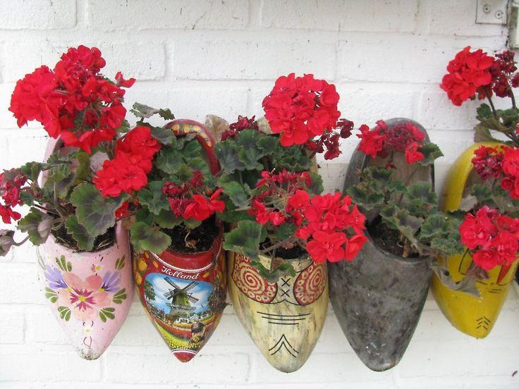 Geraniums in klompen - 50plusser.nl