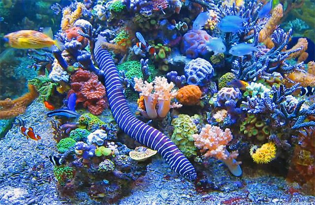 This is dormero rotes ross vibrant reef aquarium stocked for Reef aquarium fish