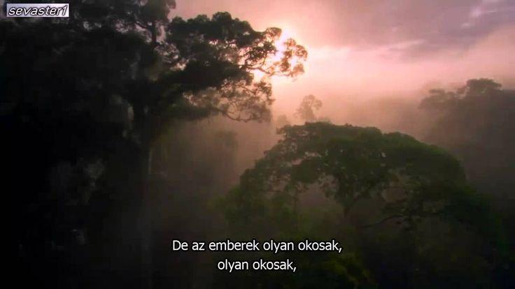 A Természet szól hozzád – Kevin Spacey, az Esőerdő
