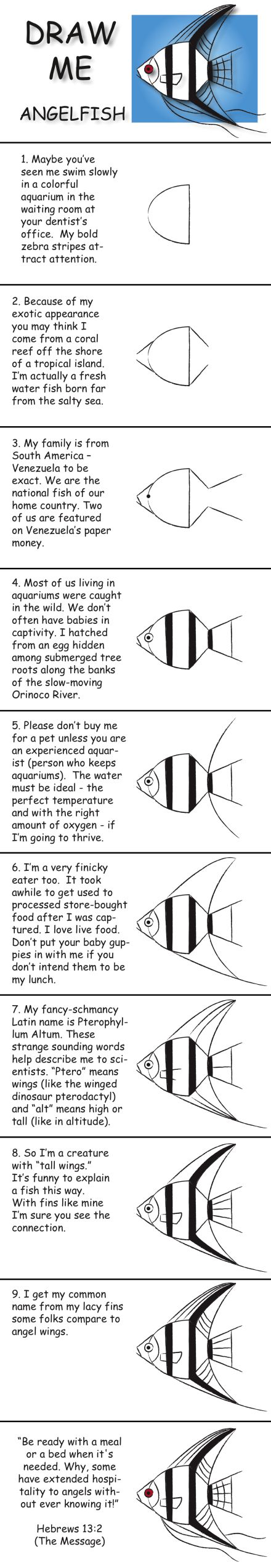 Draw an angelfish in 10 easy steps and learn fun facts about its life. © 2013