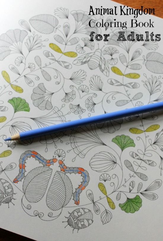 Animal Kingdom Colouring Raccoon : 42 best adult colouring books images on pinterest