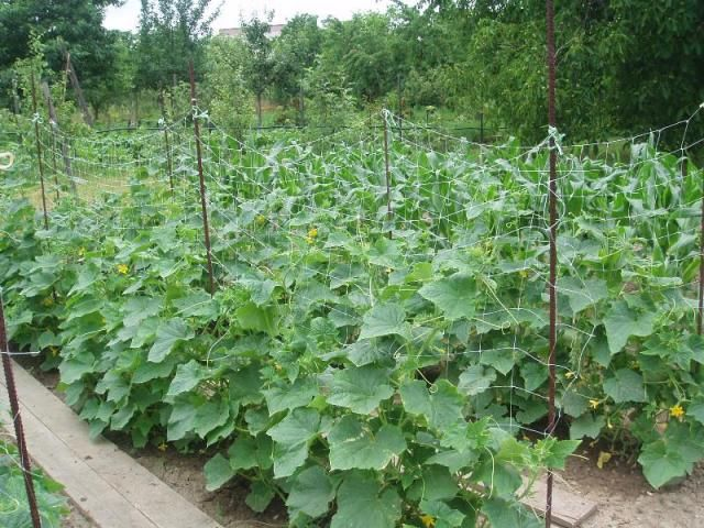 zeleninová záhrada dnes2