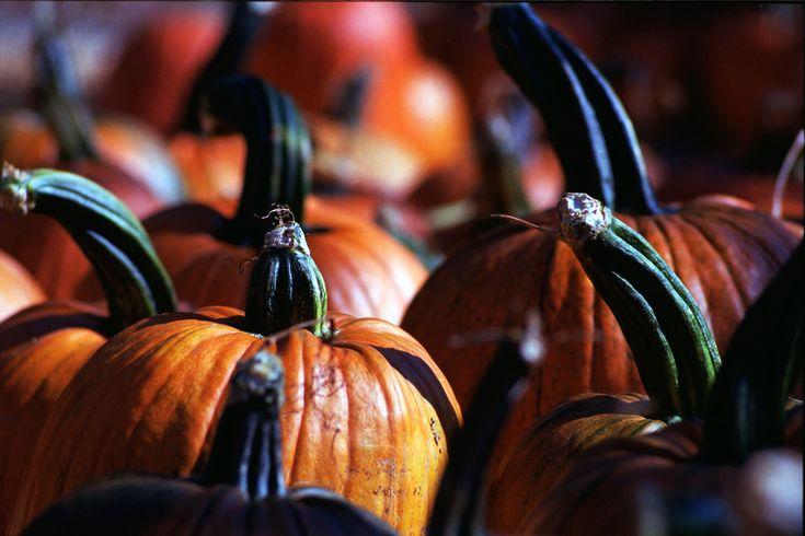 6 formas de pintar calabazas para Halloween  #halloween #diy #decoracion #crafts