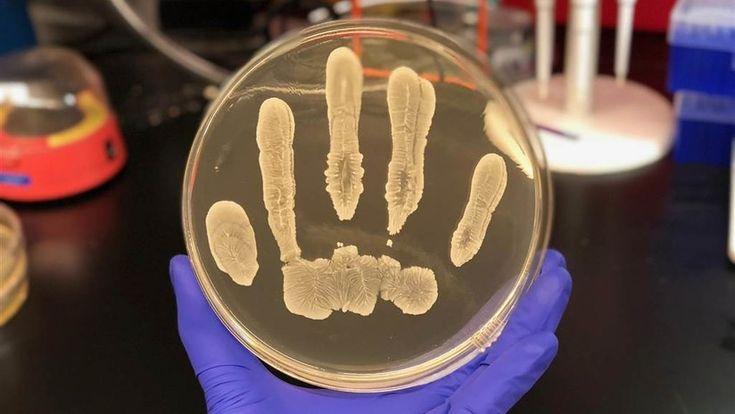 ICYMI: La piel humana contiene una bacteria clave que podría combatir el cáncer