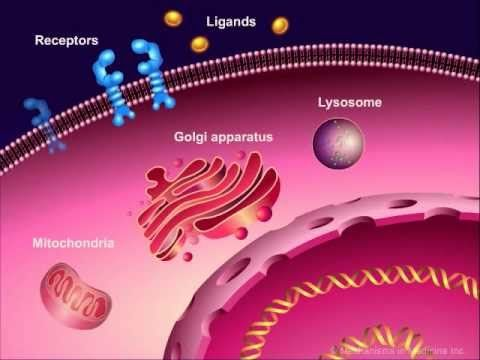 "Introduction to Cancer Biology (Part 1): Abnormal Signal Transduction     --     rmm     --     This animation is the first part of the series ""An Introduction to Cancer Biology"", and explains the mechanism of abnormal signal transduction resulting in uncontrolled cell proliferation. This animation also provides an overview of the potential targets of anticancer therapies."