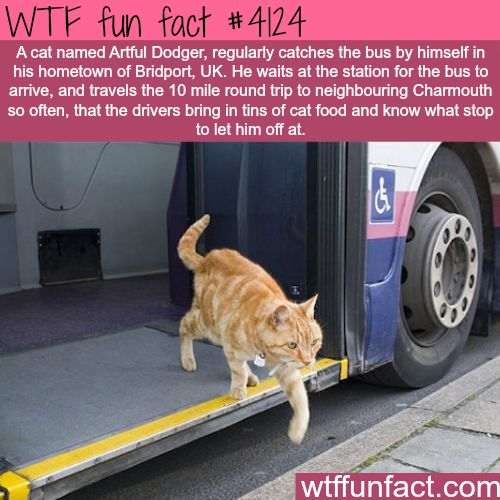 Cat takes the bus regularly - WTF fun facts bahaha AWESOME