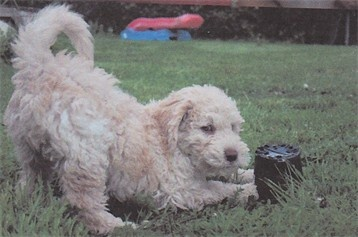 here is hugin when he was a puppy , wasnt he just adorable <3_<3