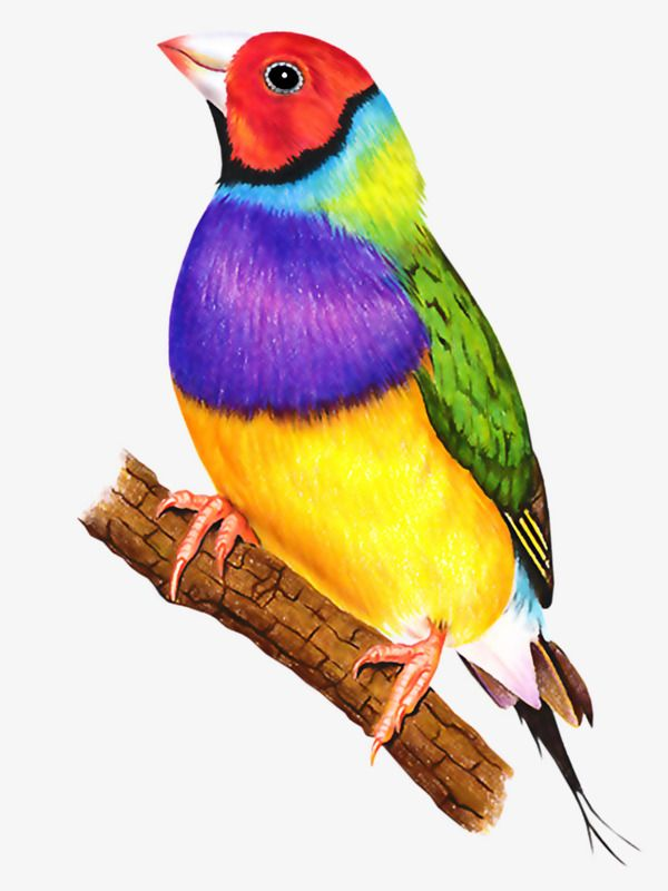 Birds colorful. In bird clipart