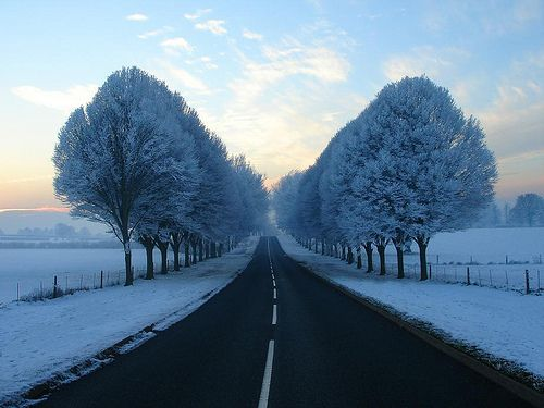 A long road between snow covered trees and fields