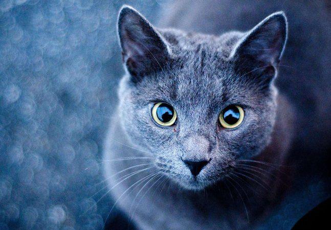 """É comum que certa obsessão por gatos seja folcloricamente apontada como sintoma de loucura. Apesar de parecer generalização rasteira, sob influência de filmes e histórias infantis, uma polêmica pesquisa recente levanta a possibilidade dessa ligação não estar totalmente incorreta. Segundo estudo publicado no jornal """"Schizophrenia Research"""", indicou que mais de 50% das crianças que, na vida adulta, serão diagnosticadas com esquizofrenia possuíram gatos ao longo da vida. O resultado se alinha a…"""