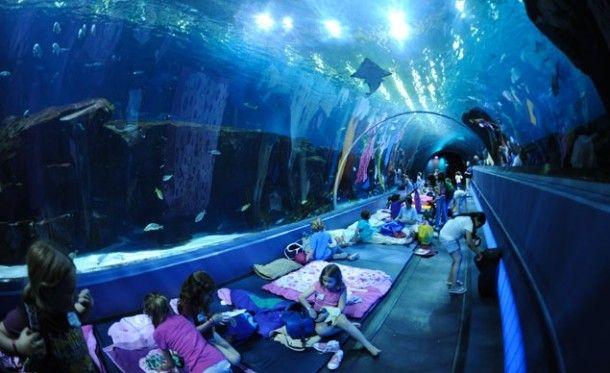 El acuario de Georgia en Georgia, USA. l acuario no es un hotel, pero deja que niños y adultos pasen la noche en sus instalaciones. Puedes decidir entre dormir con las ballenas, pulpos, o hasta ¡tiburones!