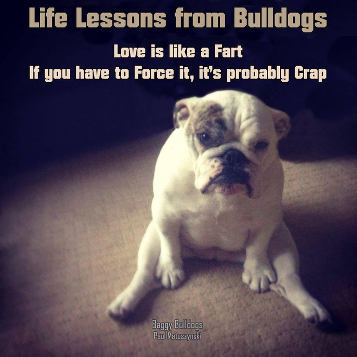 1000+ Bulldog Quotes on Pinterest | Bulldogs, English ...