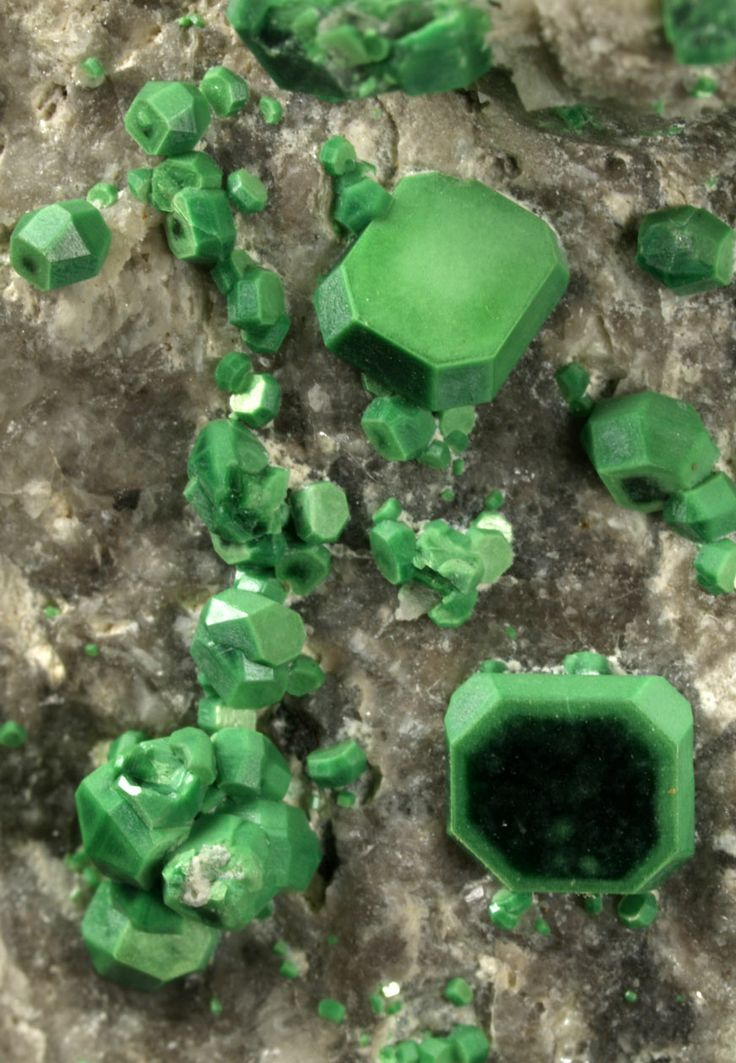 Group of isolated and very sharp metatorbernite crystals, with an intense green grass color, showing the combination of the first and the second order dipyramids, truncated by pinacoidal faces. Its intense color gives a nice contrast with the white quartz matrix.