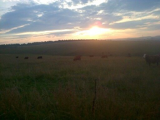 South african farm sunset... Breath taking
