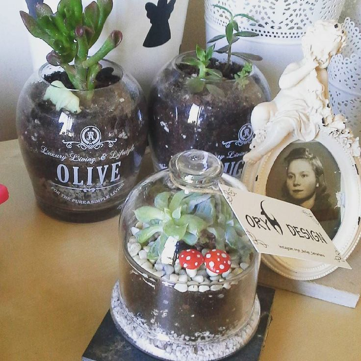 Erdinç bey için hazırladığımız anneler günü hediyesi hazır :) güzel günlerde büyütsünler :) #green #terrarium #succulent #cacti #cactus #lithops #love #succulove #hediyelik #hediye #tasarım #izmir #kaktüs #kaktus #çiçek #annelergünü #anne #annelergunu by oryx_design_terrariums