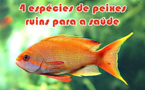 Conheça 4 espécies de peixes que não devem ser consumidos #dicas #saude #peixes #alimentação