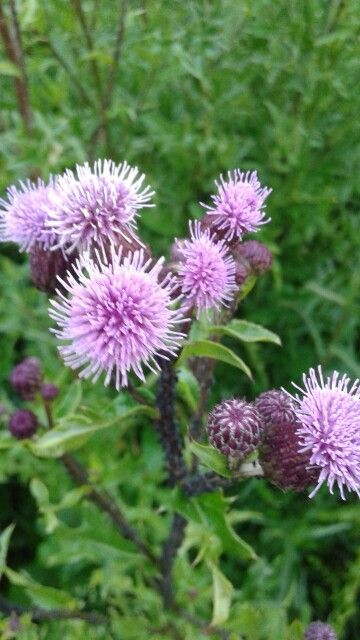 Aparat w łatwy sposób wychwytuje piękno pospolitych roślin